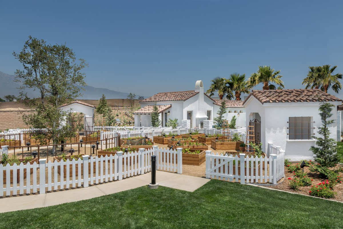 New Homes in Upland, CA - Springtime at Harvest Rec Center - Garden