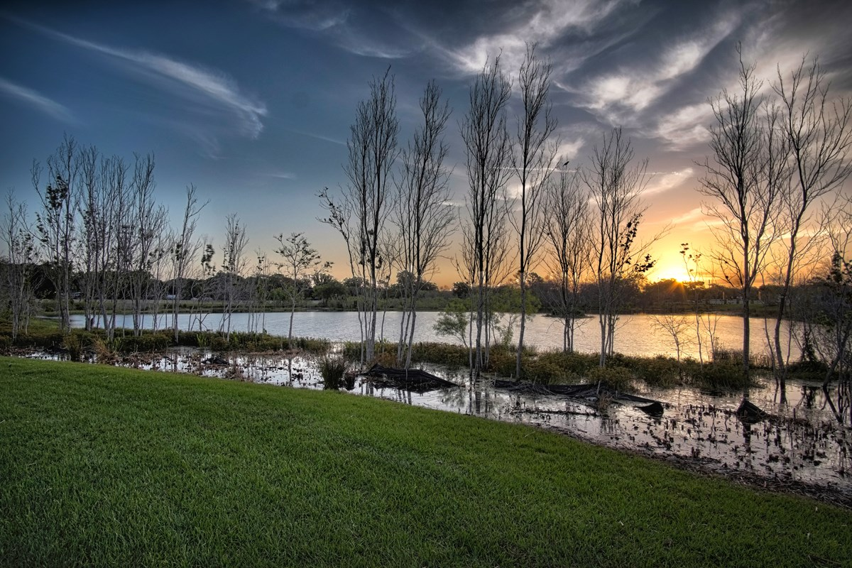 New Homes in Riverview, FL - Medford Lakes II View of Community's Wetland Conservation Area