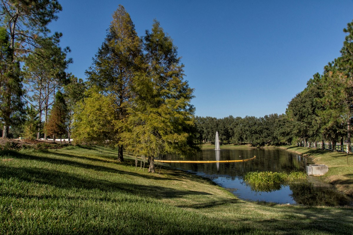 New Homes in Land O' Lakes, FL - The Woodlands Community's 1.35-Acre Preservation Area