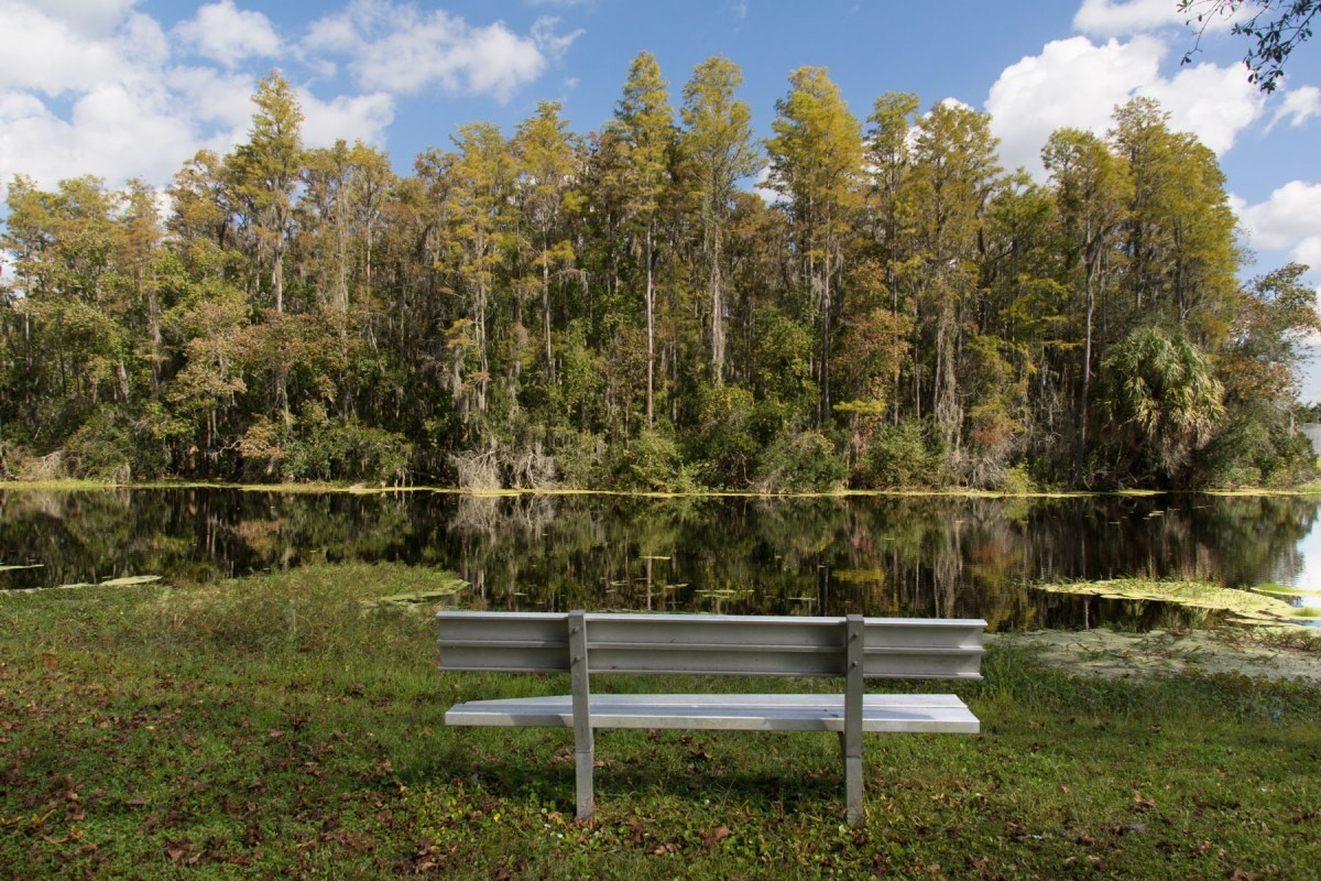 New Homes in Trinity, FL - Wild Fern Village at Trinity Lakes W. H. Jack Mitchell Jr. Park